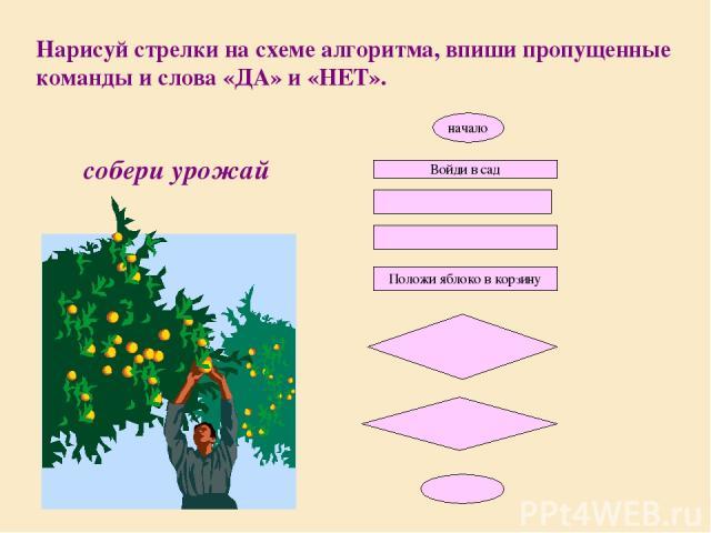 Нарисуй стрелки на схеме алгоритма, впиши пропущенные команды и слова «ДА» и «НЕТ». собери урожай начало Войди в сад Положи яблоко в корзину