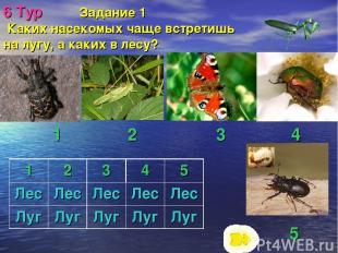 6 Тур Задание 1 Каких насекомых чаще встретишь на лугу, а каких в лесу? 5 1 2 3