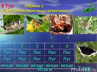 6 Тур Задание 2 Каких насекомых чаще встретишь на лугу, в лесу, а каких и там и