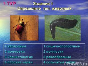1 ТУР Задание 1 Определите тип животных . 1 насекомые 1 кишечнополостные 2 моллю