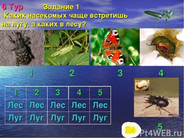 6 Тур Задание 1 Каких насекомых чаще встретишь на лугу, а каких в лесу? 5 1 2 3 4