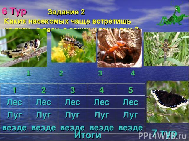 6 Тур Задание 2 Каких насекомых чаще встретишь на лугу, в лесу, а каких и там и там ? 1 2 3 4 Итоги 7 тур