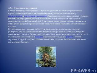 4.3.1. Строение голосеменных Голосеменные (Gymnospermae) – наиболее древняя и до