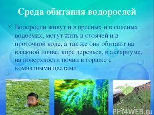 Среда обитания водорослей Водоросли живут и в пресных и в соленых водоемах, могу