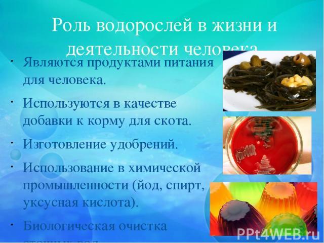 Роль водорослей в жизни и деятельности человека Являются продуктами питания для человека. Используются в качестве добавки к корму для скота. Изготовление удобрений. Использование в химической промышленности (йод, спирт, уксусная кислота). Биологиче…