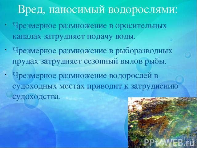 Вред, наносимый водорослями: Чрезмерное размножение в оросительных каналах затрудняет подачу воды. Чрезмерное размножение в рыборазводных прудах затрудняет сезонный вылов рыбы. Чрезмерное размножение водорослей в судоходных местах приводит к затрудн…