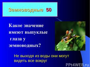 Земноводные 50 Какое значение имеют выпуклые глаза у земноводных? Не выходя из в