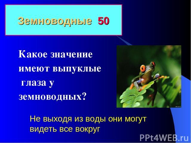 Земноводные 50 Какое значение имеют выпуклые глаза у земноводных? Не выходя из воды они могут видеть все вокруг
