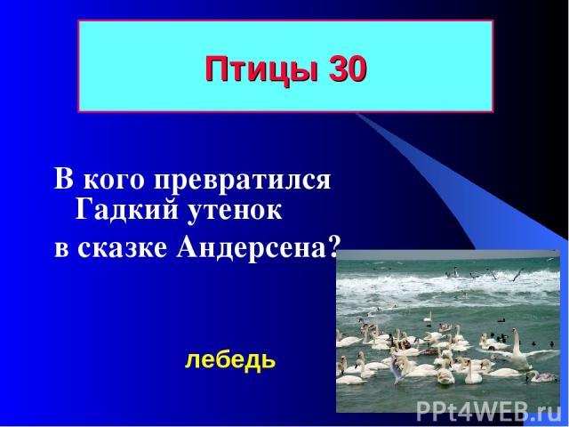 Птицы 30 В кого превратился Гадкий утенок в сказке Андерсена? лебедь
