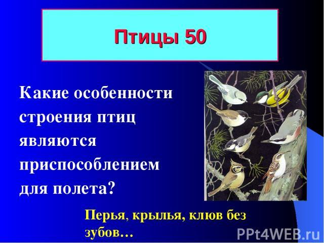 Птицы 50 Какие особенности строения птиц являются приспособлением для полета? Перья, крылья, клюв без зубов…