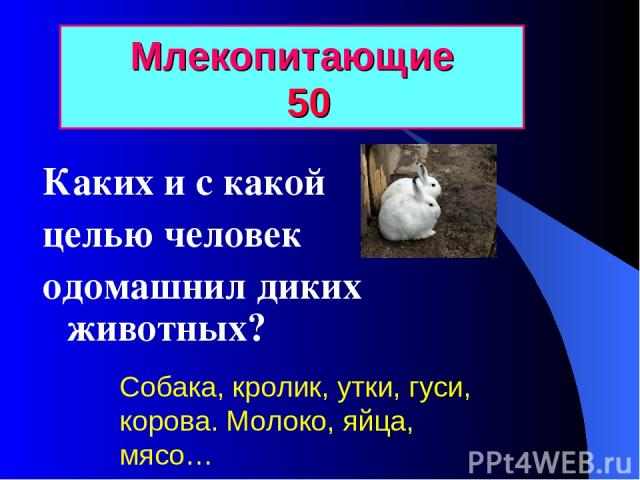 Млекопитающие 50 Каких и с какой целью человек одомашнил диких животных? Собака, кролик, утки, гуси, корова. Молоко, яйца, мясо…