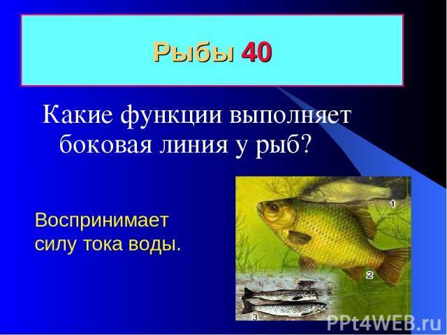 Рыбы 40 Какие функции выполняет боковая линия у рыб? Воспринимает силу тока воды.