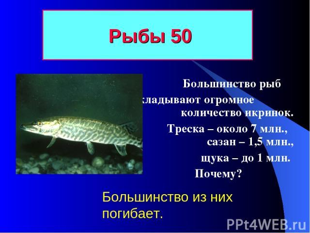 Рыбы 50 Большинство рыб откладывают огромное количество икринок. Треска – около 7 млн., сазан – 1,5 млн., щука – до 1 млн. Почему? Большинство из них погибает.