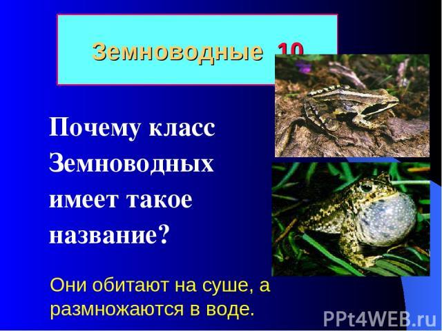 Земноводные 10 Почему класс Земноводных имеет такое название? Они обитают на суше, а размножаются в воде.