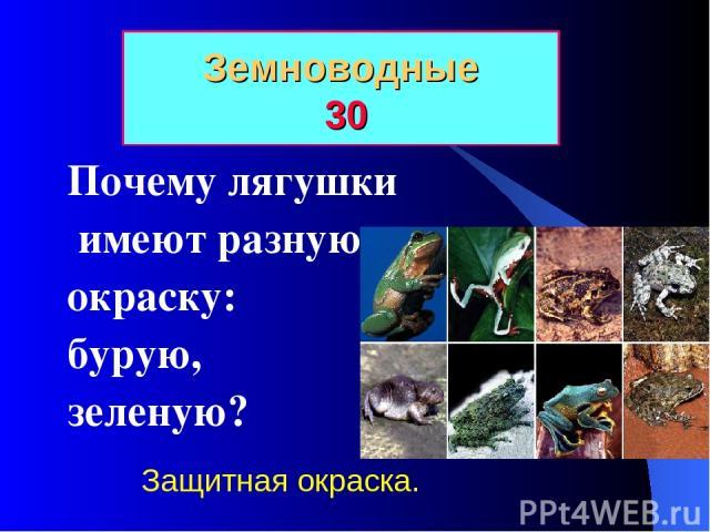 Земноводные 30 Почему лягушки имеют разную окраску: бурую, зеленую? Защитная окраска.