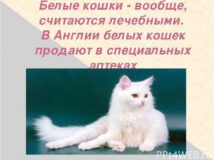 Белые кошки - вообще, считаются лечебными. В Англии белых кошек продают в специа