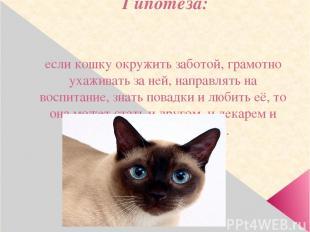 Гипотеза: если кошку окружить заботой, грамотно ухаживать за ней, направлять на