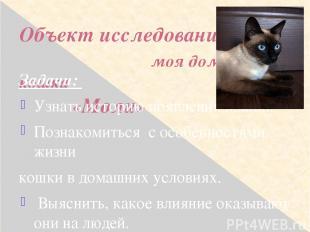 Объект исследования: моя домашняя кошка «Моли» Задачи: Узнать историю появления