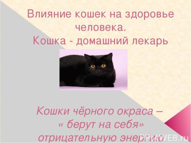 Влияние кошек на здоровье человека. Кошка - домашний лекарь Кошки чёрного окраса – « берут на себя» отрицательную энергию человека.