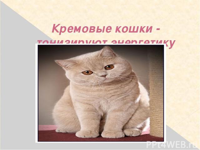 Кремовые кошки - тонизируют энергетику хозяина