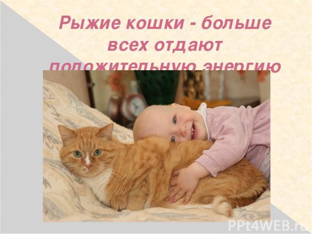 Рыжие кошки - больше всех отдают положительную энергию