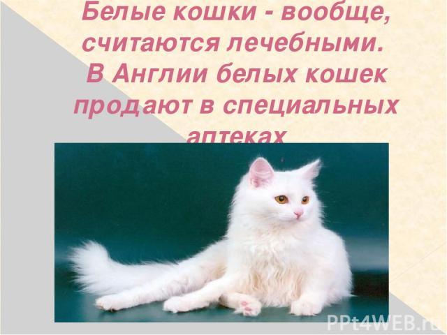 Белые кошки - вообще, считаются лечебными. В Англии белых кошек продают в специальных аптеках