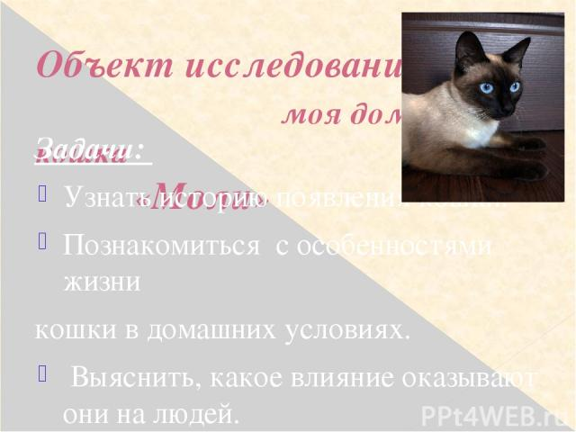 Объект исследования: моя домашняя кошка «Моли» Задачи: Узнать историю появления кошки. Познакомиться с особенностями жизни кошки в домашних условиях. Выяснить, какое влияние оказывают они на людей. Провести анкетирование среди моих одноклассников. …