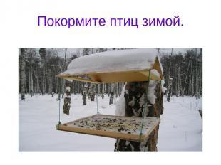 Покормите птиц зимой.