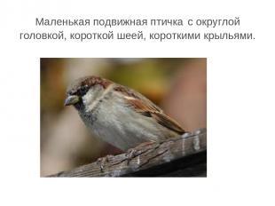 Маленькая подвижная птичка с округлой головкой, короткой шеей, короткими крыльям