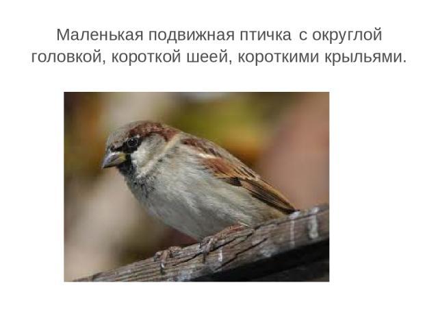Маленькая подвижная птичка с округлой головкой, короткой шеей, короткими крыльями.
