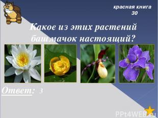 города 10 Переставь буквы, чтобы получилось слово: сиснку. . Ответ: Усинск