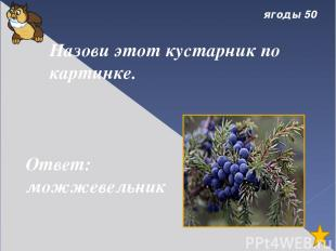 Снежные слова 30 Если твёрдые белые шарики больно секут щёки и лоб, мы говорим .