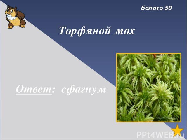 болото 30 Растение – хищник, питающееся насекомыми. Ответ: росянка