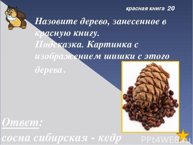 болото 50 Торфяной мох Ответ: сфагнум