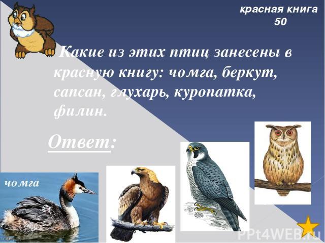 Города 30 Назовите 3 города, которые названы в честь рек на которых они стоят Ответ: Печора, Усинск, Сыктывкар