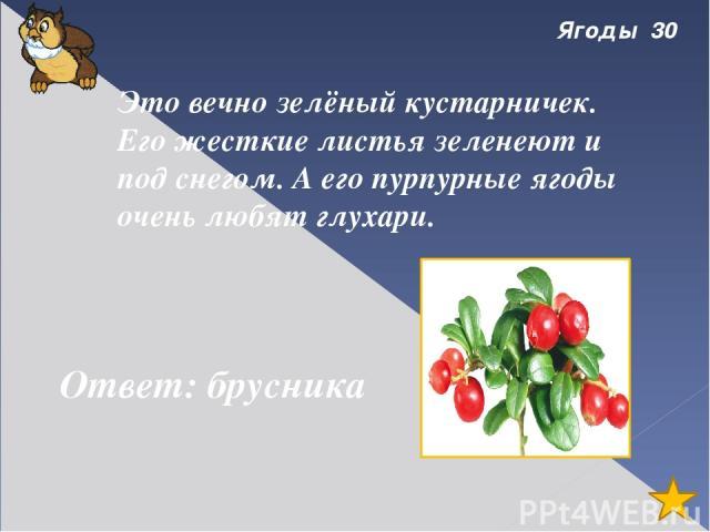 ягоды 50 Назови этот кустарник по картинке. Ответ: можжевельник