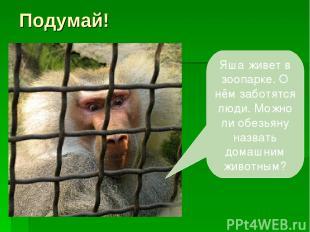 Подумай! Яша живет в зоопарке. О нём заботятся люди. Можно ли обезьяну назвать д