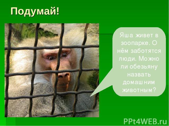 Подумай! Яша живет в зоопарке. О нём заботятся люди. Можно ли обезьяну назвать домашним животным?