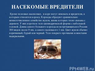НАСЕКОМЫЕ ВРЕДИТЕЛИ Кроме полезных насекомых. в коре могут зимовать и вредители,