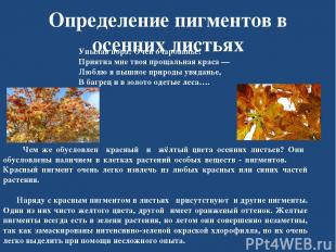 Определение пигментов в осенних листьях Унылая пора! Очей очарованье! Приятна мн