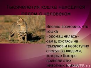 Тысячелетия кошка находится рядом с человеком Вполне возможно, что кошка «одомаш