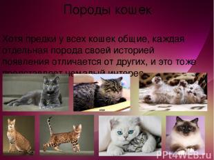 Породы кошек Хотя предки у всех кошек общие, каждая отдельная порода своей истор