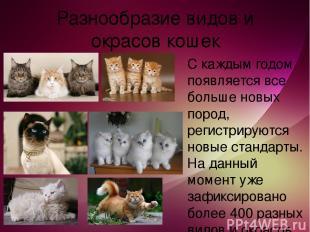 Разнообразие видов и окрасов кошек С каждым годом появляется все больше новых по