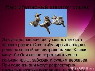 Вестибулярный аппарат кошек За чувство равновесия у кошек отвечает хорошо развит
