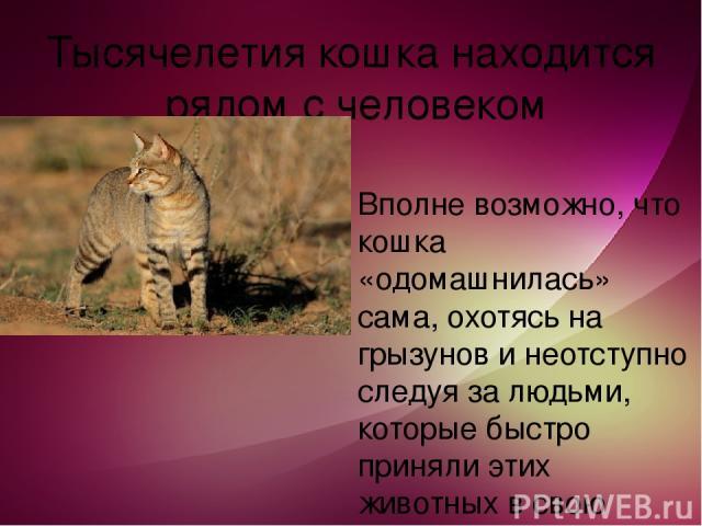 Тысячелетия кошка находится рядом с человеком Вполне возможно, что кошка «одомашнилась» сама, охотясь на грызунов и неотступно следуя за людьми, которые быстро приняли этих животных в свою жизнь.