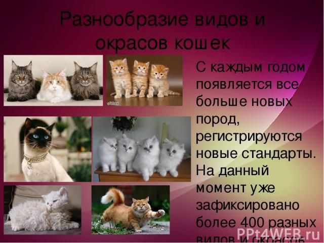 Разнообразие видов и окрасов кошек С каждым годом появляется все больше новых пород, регистрируются новые стандарты. На данный момент уже зафиксировано более 400 разных видов и окрасов кошек!