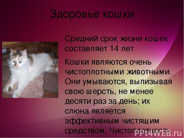 Здоровье кошки Средний срок жизни кошек составляет 14 лет Кошки являются очень чистоплотными животными. Они умываются, вылизывая свою шерсть, не менее десяти раз за день; их слюна является эффективным чистящим средством. Чистоплотность является инст…