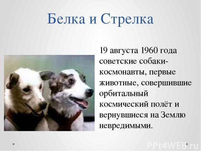 Белка и Стрелка 19 августа 1960 года советские собаки-космонавты, первые животные, совершившие орбитальный космический полёт и вернувшиеся на Землю невредимыми.
