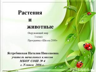 Растения и животные Ястребинская Наталия Николаевна учитель начальных классов МБ