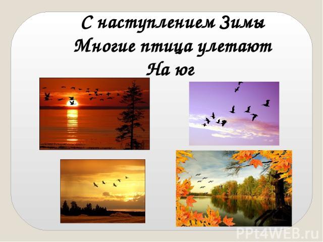 С наступлением Зимы Многие птица улетают На юг